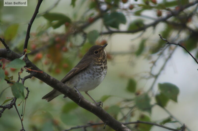 I heard the rising song of a Swainson's Thrush as we walked before setting off on our paddle.