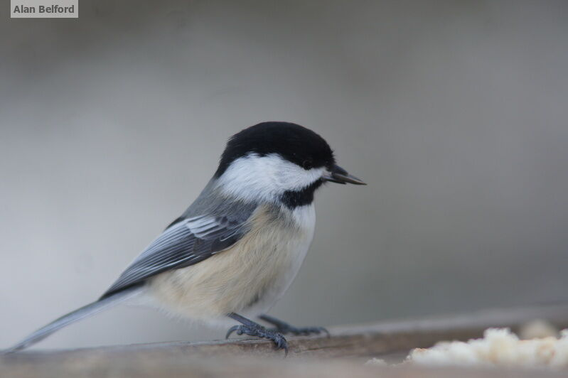 I enjoyed watching the Black-capped Chickadees and Red-breasted Nuthatches at the center's bird feeders.