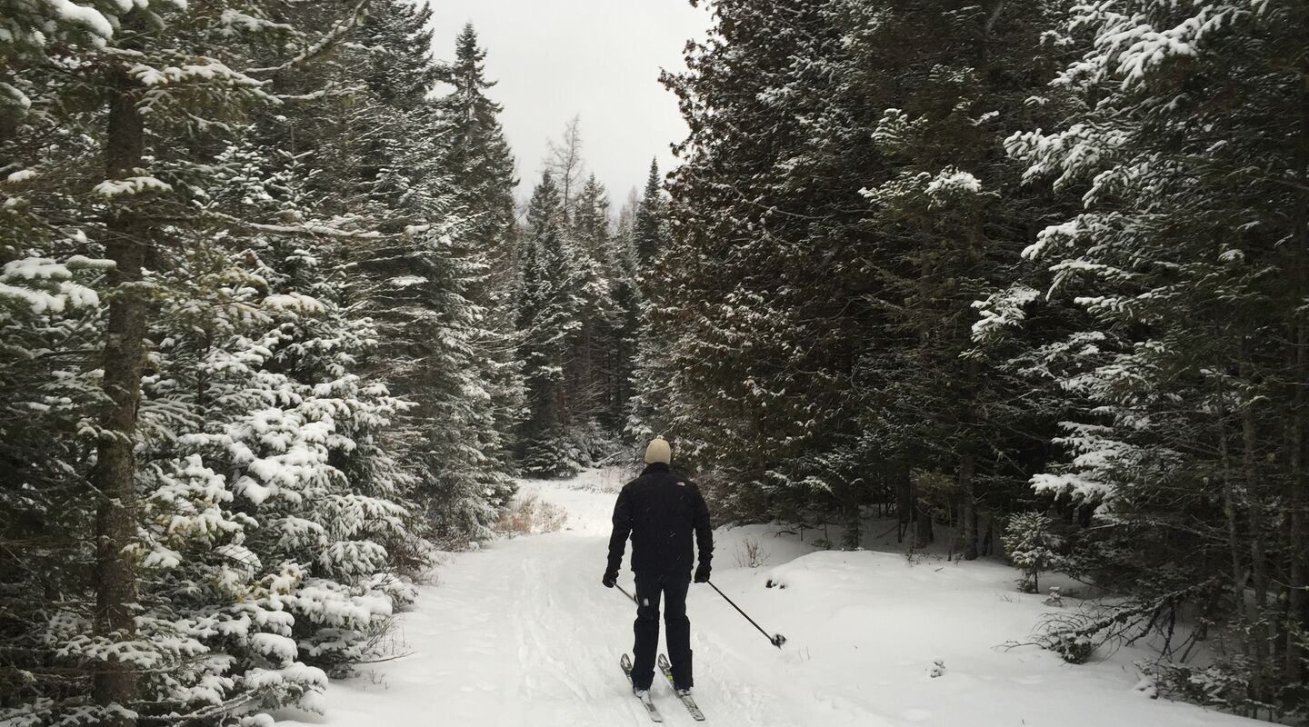 Enjoy the lush forest in winter with some backcountry skiing.