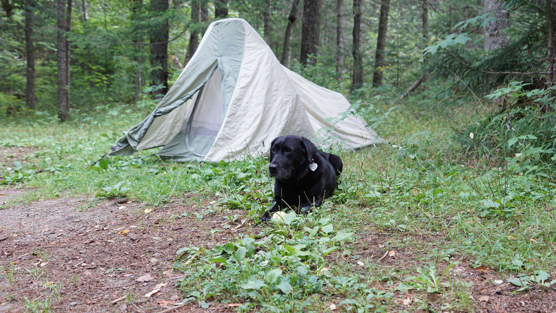 Camping and Exploring in Vanderwhacker Mountain Wild ...